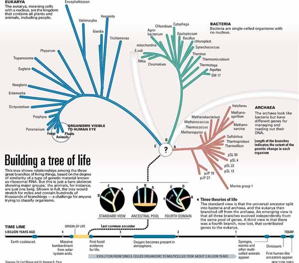 the tree of life summary