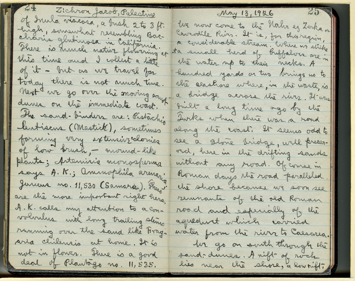 Jepson Field Book 44_25
