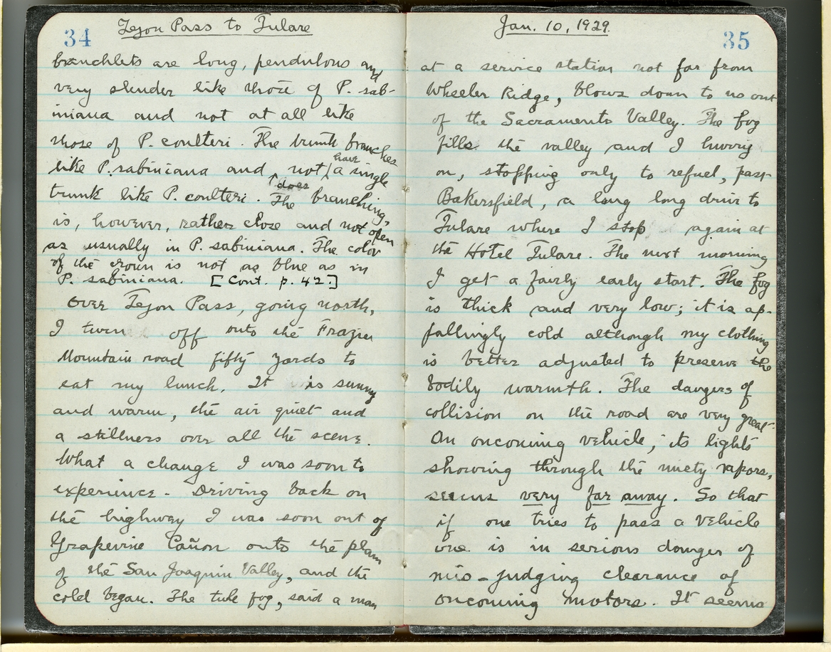 Jepson Field Book 49_34