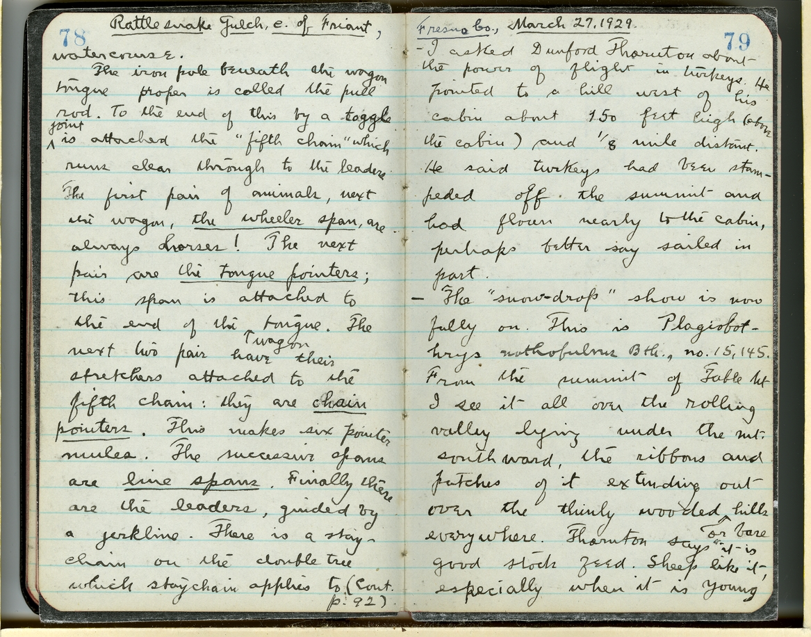 Jepson Field Book 49_79