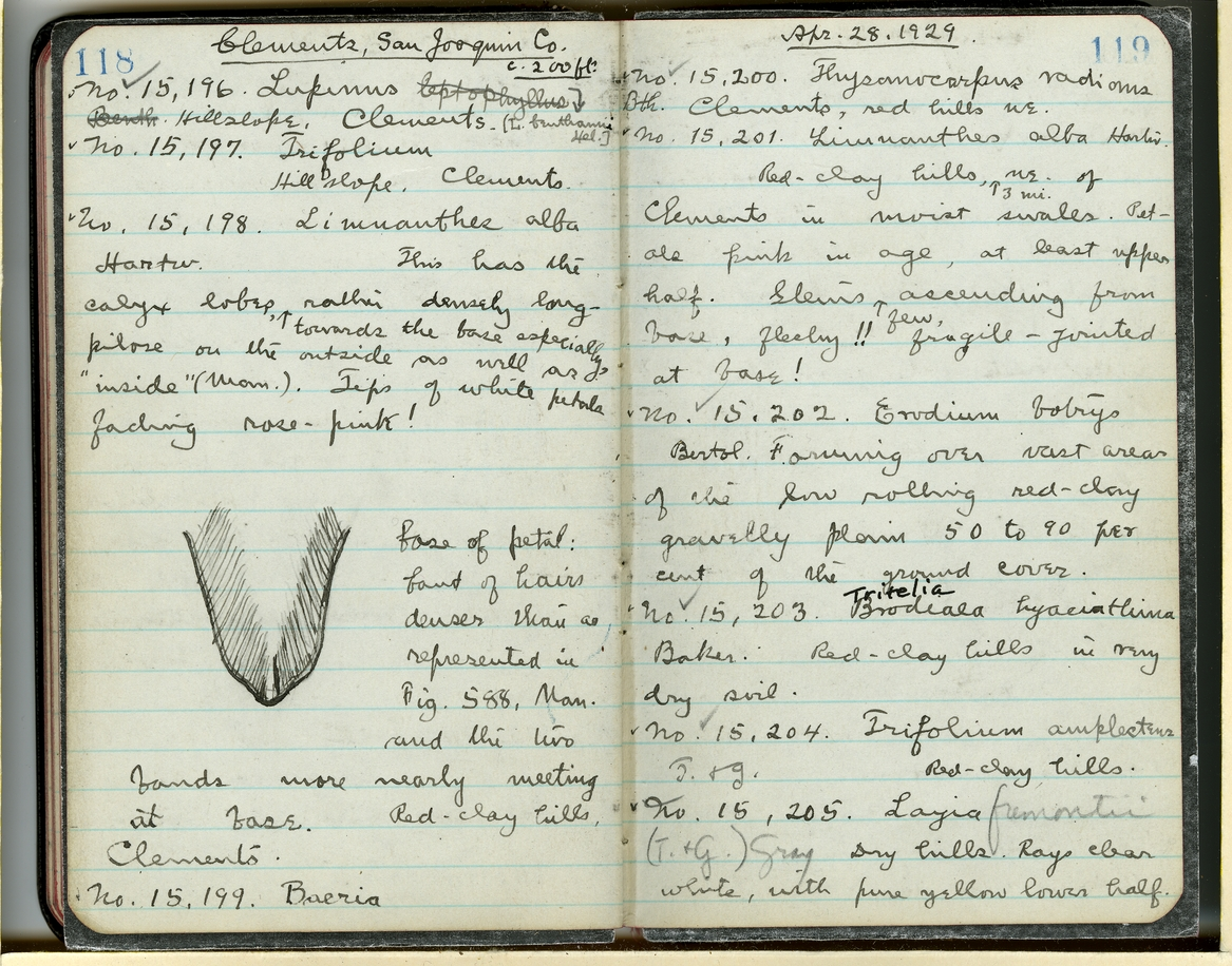Jepson Field Book 49_119