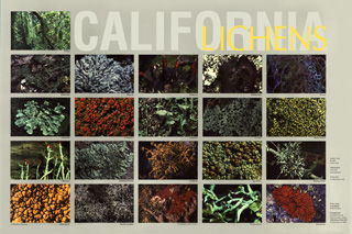 California Lichen Society Home Page: supplanted